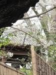 20120410上野時の鐘s-.jpg